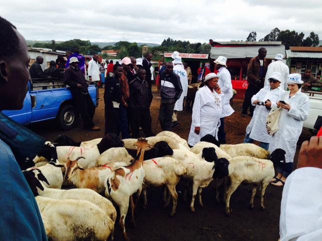 Visiting Maasai cattle market #CBA9 http://t.co/YSTy2kFlsE